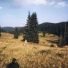 landschaft02_jpg